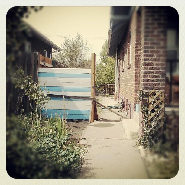 New fence #diy #cedar