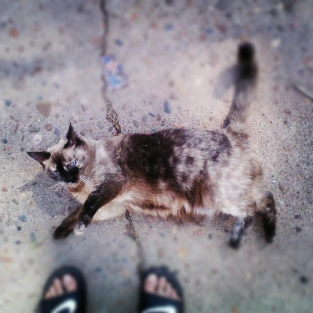 Sweet cat I found