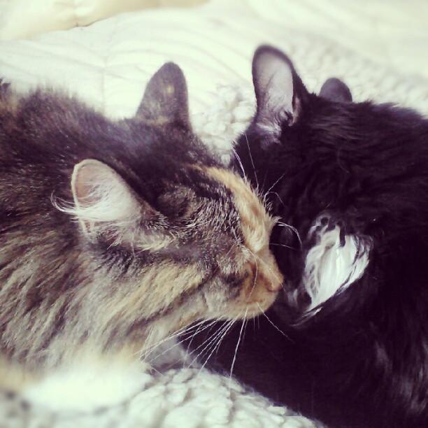 Maple and Frida