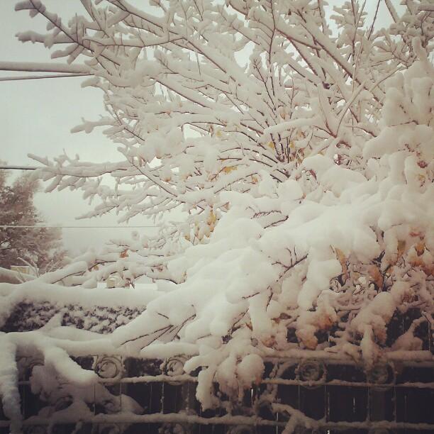 Snow #denver
