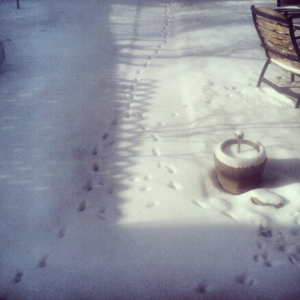 Tracks in the snow #cats #christmas #snow