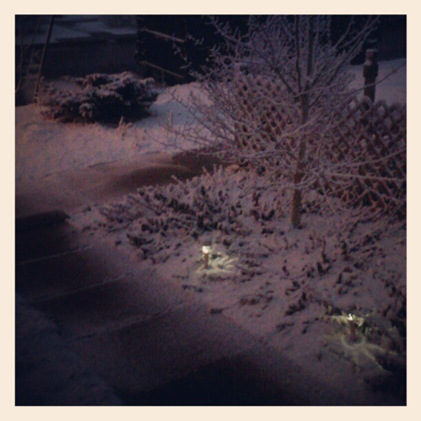 Late january snow #denver  #snow