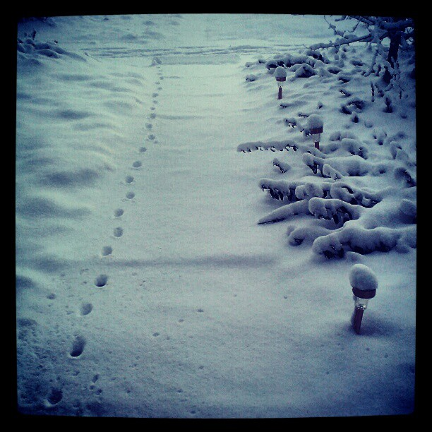 Little visitors #denver #snow #feral #stray #cats