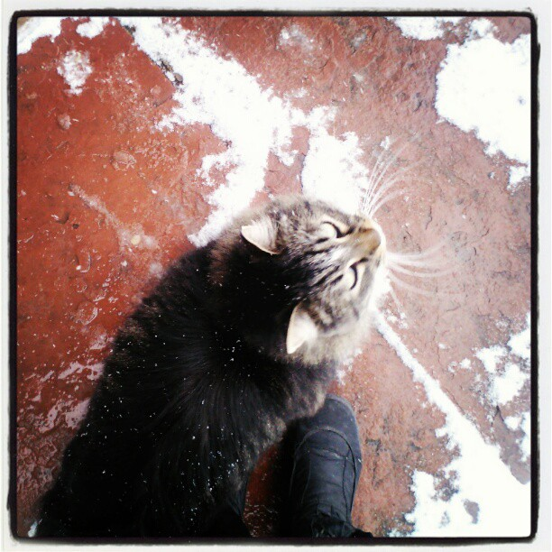 Neither snow nor rain ... Creed of a feral #cat