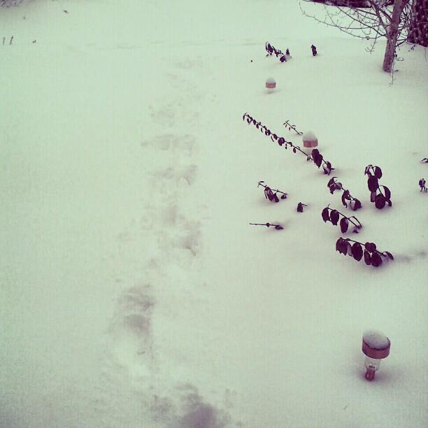 Need to shovel #denver #snow