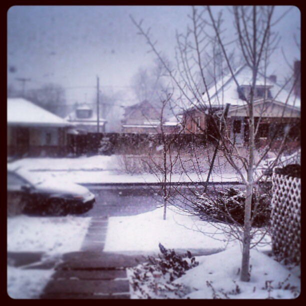 Lovely day #march #snow #colorado