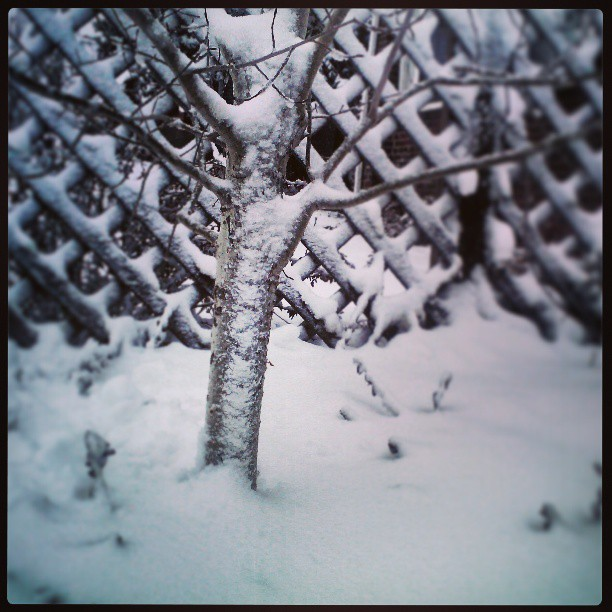 Aspen #aspen #tree #snow #denver #mayfair