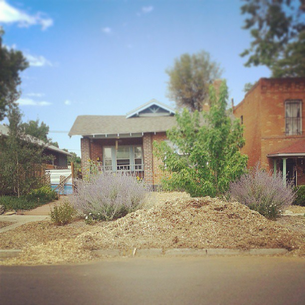 Mulch mountain day three #garden #denver