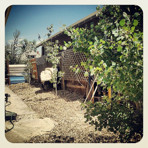 Mulch progress #garden #denver