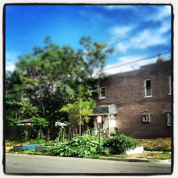 Urban farming #denver #neighborhood #farm #veggies #street #grow #food