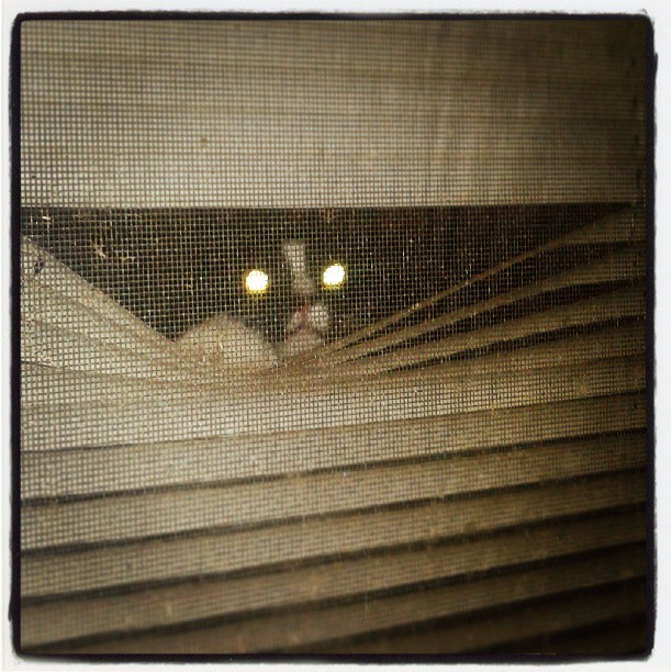 This is why we cant have nice things #cat #eyes #blinds