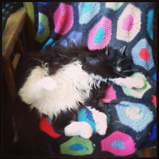 Frida takes a nap #cat #catnap #sleeping #crochet