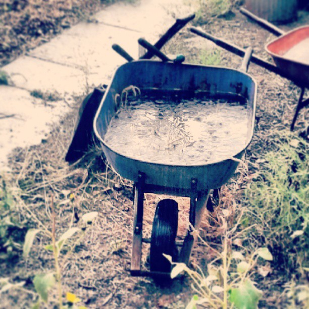 Wheelbarrow full of rainwater #Denver #rain #andmorerain