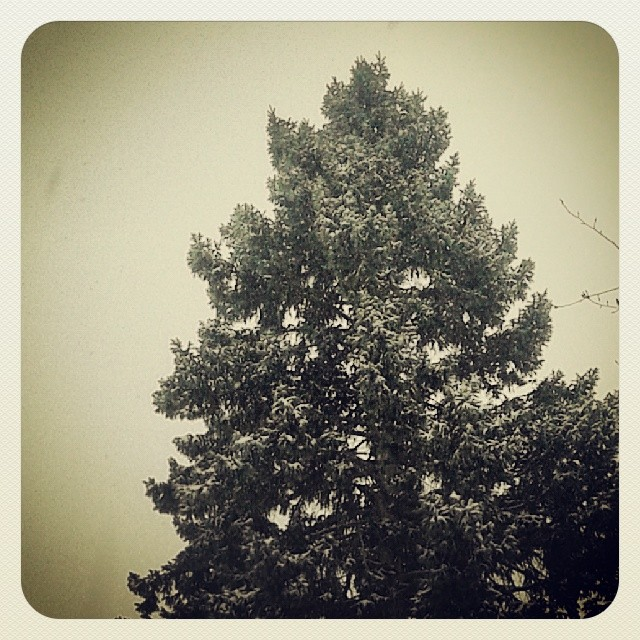 Snowy treetops #Denver #milehighcity #snow #winter
