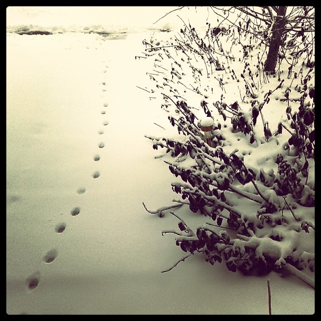 Tiny footprints #feral #cats #Denver