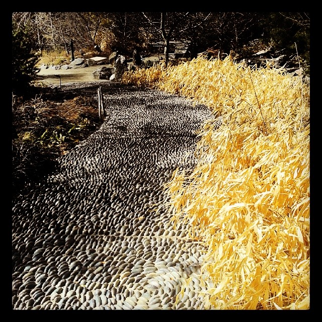 Pebble walk #Denver #botanicgardens #garden #rock