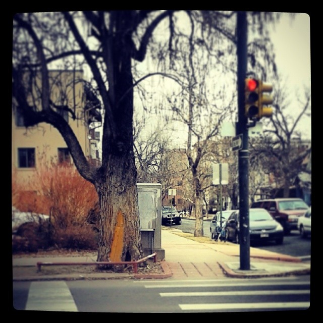 Secret door on tree #Denver #Washington