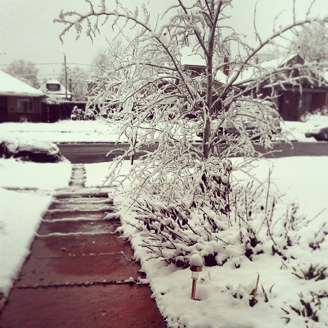 This is not an April Fool's joke #april #snow #Denver