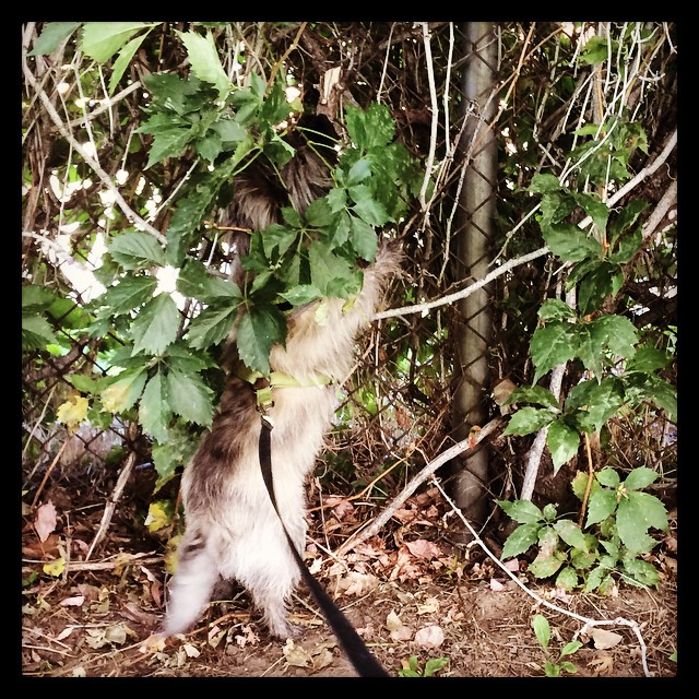 Squirrel Ridge Dog Park