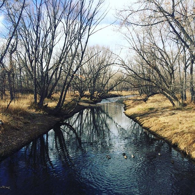 Morning walk with Ozzie #clearcreektrail #narnia #beauty #nature