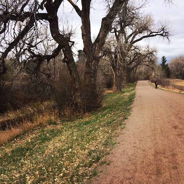 Walk before the rain #denver #cairnterrier #hikingtrail #bikepath #spring