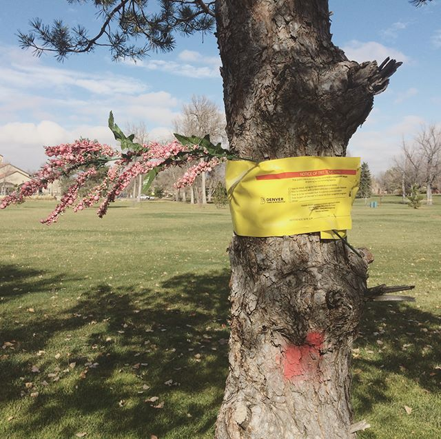 Notice of removal #denver #trees